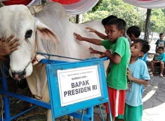 Warga Antusias Lihat Sapi Kurban dari Presiden Jokowi