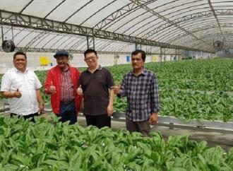 Djarot Dorong Milenial Karo dan Dairi Kembangkan Hidroponik