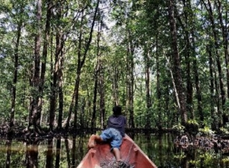 Koperasi Dapat Izin Pengelolaan Kawasan Hutan