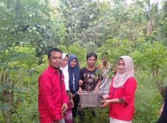 PDI Perjuangan Enrekang Tanam 700 Pohon Serentak