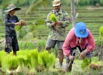 Budiman Gagas Gerakan Peduli Pangan Desa Kota