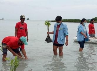 HUT Megawati, Banteng Kepulauan Seribu Tanam 1.973 Mangrove