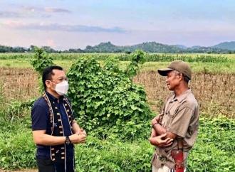 Sinergi Ansy-Kementan Bikin Petani TTS Sukses Panen Perdana