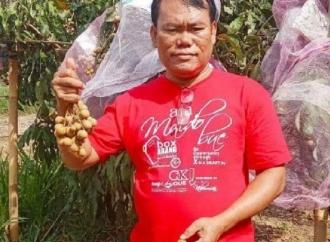 PDI Perjuangan Puring Dongkrak Agrowisata Kebun Klengkeng
