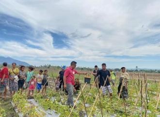 Dibantu Ansy, Petani Leuntolu Berhasil Panen Tomat