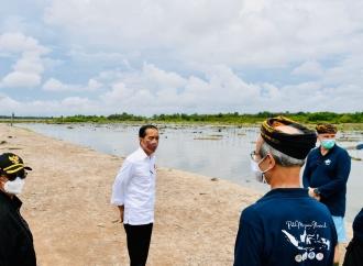 Presiden Siap Rehabilitasi 600 Ribu Hektare Hutan Manggrove