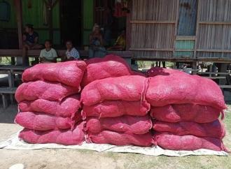 Ansy Berikan Benih Bawang Merah ke Petani Malaka
