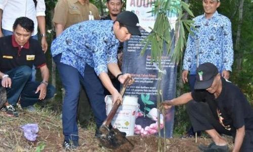Cegah Longsor, Bupati Trenggalek Tanam Pohon Bambu