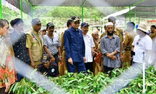 Gubernur Nurdin Abdullah Siap Ekspor Jagung Manis