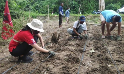 Sejahterakan Petani, Banteng Busel Pelopori Budidaya Porang