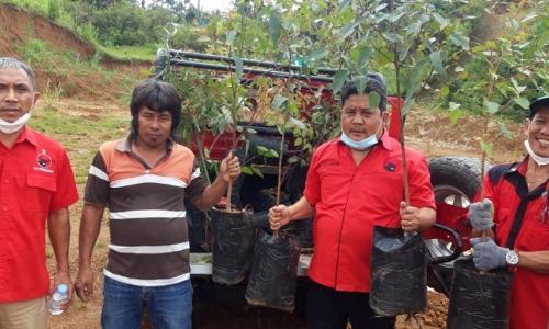 HUT Megawati, DPRD Banteng Toraja Utara Tanam 10.000 Pohon
