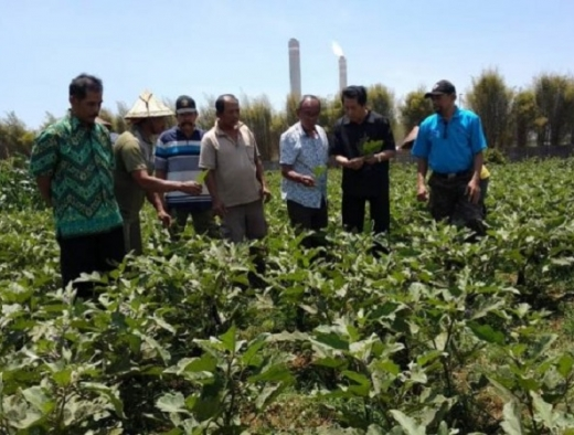 Daryatmo Bantu Petani di Sekitar PLTU yang Gagal Panen