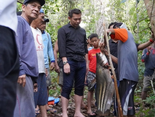 Bupati Sis Panen Raya Ikan Tapah Bersama Masyarakat