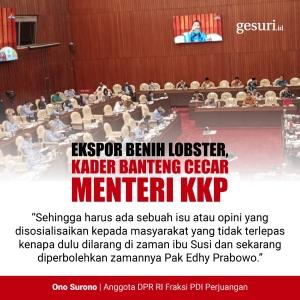 https://img.gesuri.id/dyn/content/2020/07/11/76300/ekspor-benih-lobster-kader-banteng-cecar-menteri-kkp-ZlLGzNqUsb.jpeg?w=300