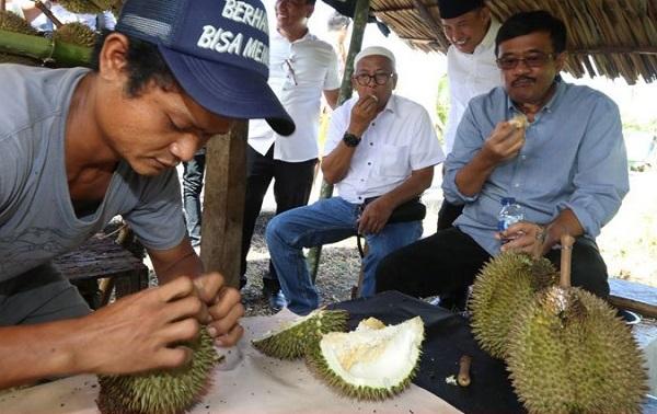Cagub Djarot Kepincut Durian Si Mentega