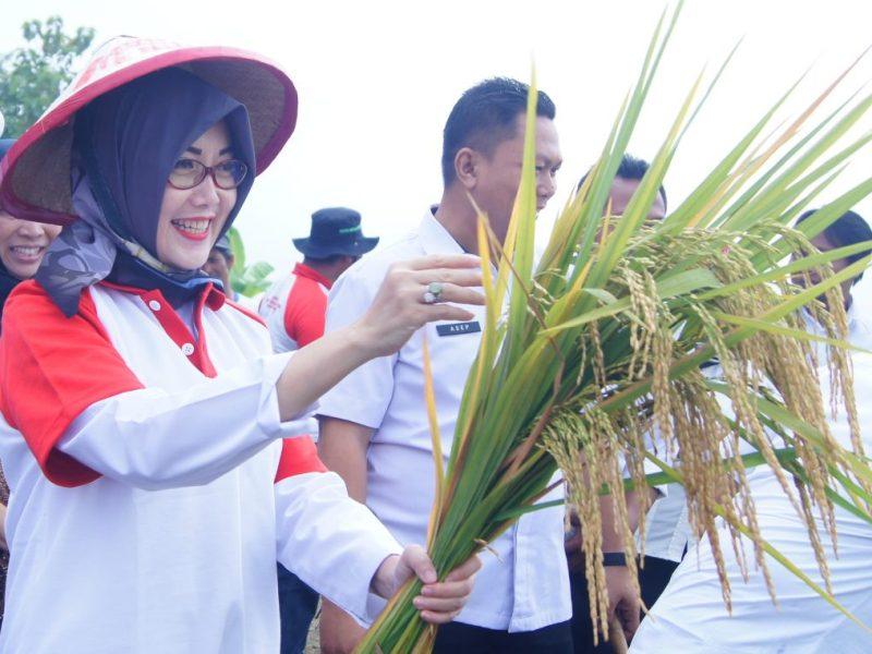 Menghargai Jasa Petani, Sosok Pahlawan yang Kian Dilupakan