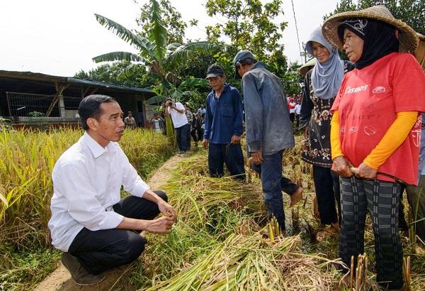 Pemerintah Jokowi Dorong Lahan Kosong jadi Sawah Produktif