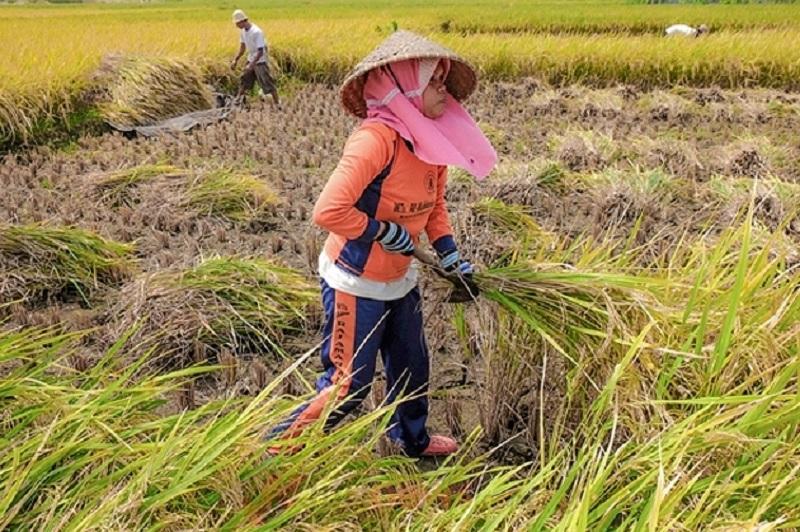 Ono: Sektor Pertanian Berhasil Dongkrak PDB Triwulan II 2018