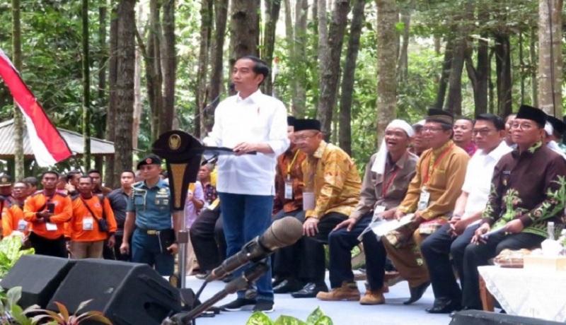 Jokowi Imbau Petani Sawit Beralih Tanam Jengkol dan Petai