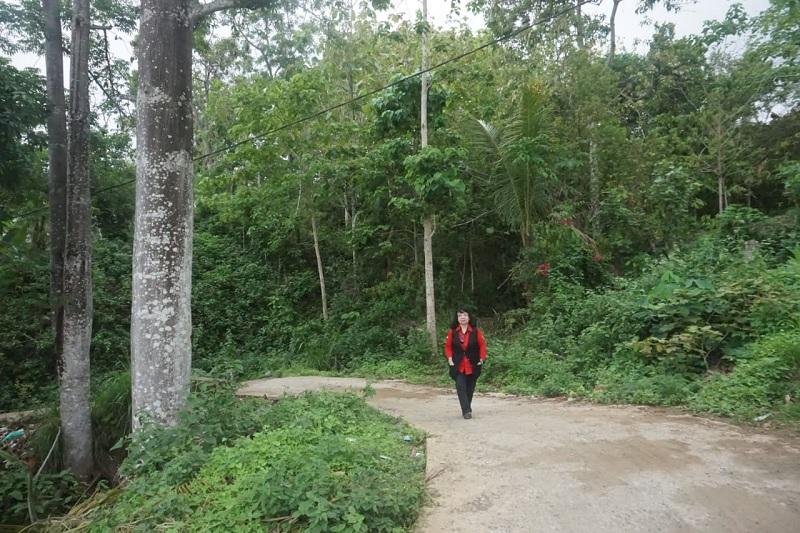 Menanam Pohon untuk Melawan Deforestasi