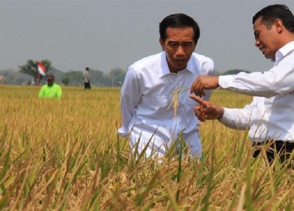 Isu Debat Kedua, 'Makanan' Sehari-hari Presiden Jokowi