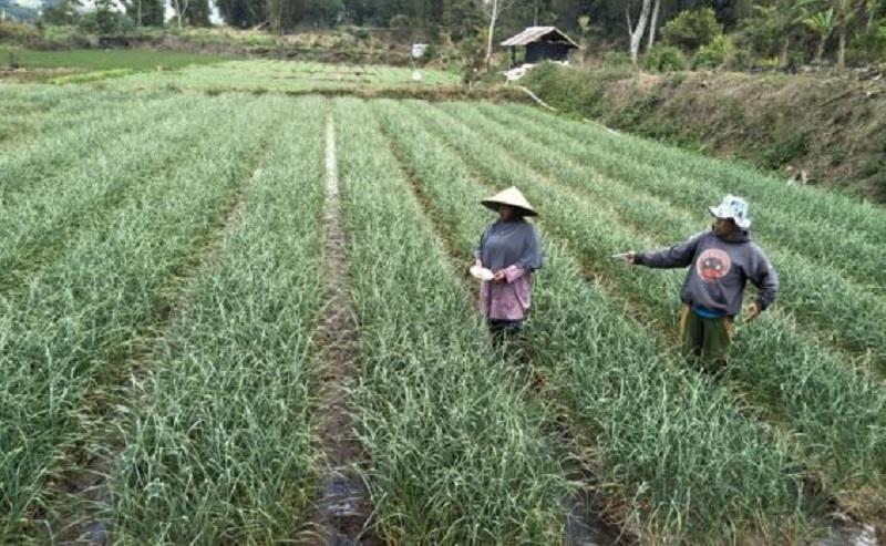 Mindo Optimistis RI Swasembada Bawang Putih di Tahun 2021