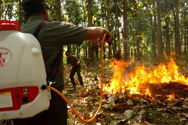Musim Kemarau, Waspada Potensi Kebakaran Hutan