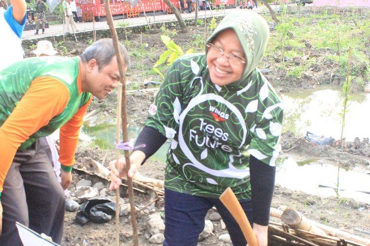 Surabaya Bakal Miliki Kebun Raya Mangrove Pertama di Dunia