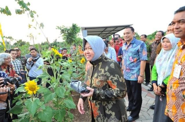 Ini Cara Jitu Risma Kurangi Polusi Udara Surabaya