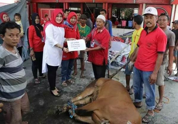 Puan Maharani Sumbang Sapi Kurban di DPC Klaten