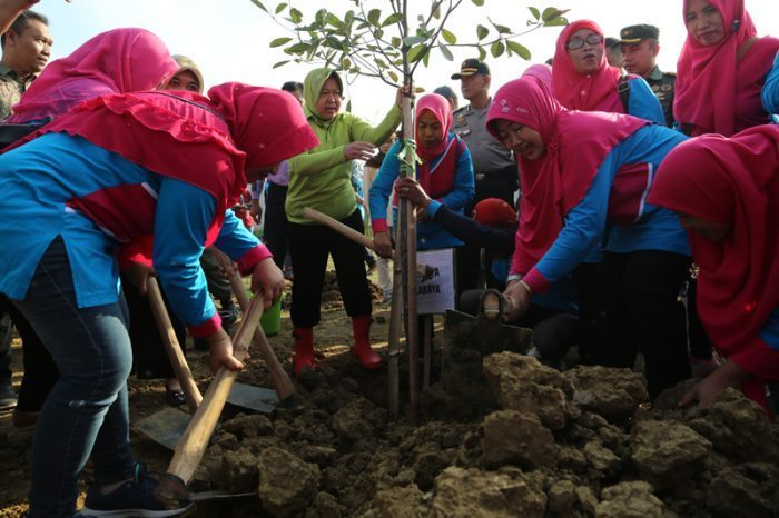 Hut ke-74 RI, Risma Pimpin Penanaman 50 ribu Pohon