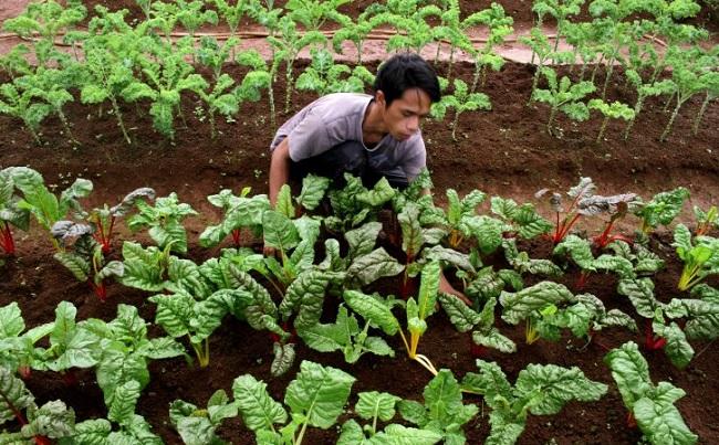 PDI Perjuangan Dukung Penetapan Ranperda Pertanian Organik