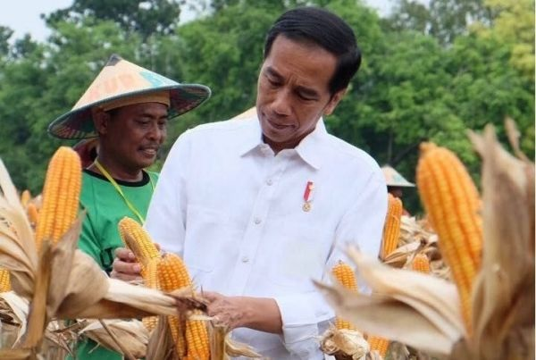 Ekspor Pertanian Meningkat Tajam di Tahun 2019