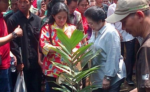 Kado Istimewa Ibu Mega, Gerakan Tanam Pohon Cintai Bumi