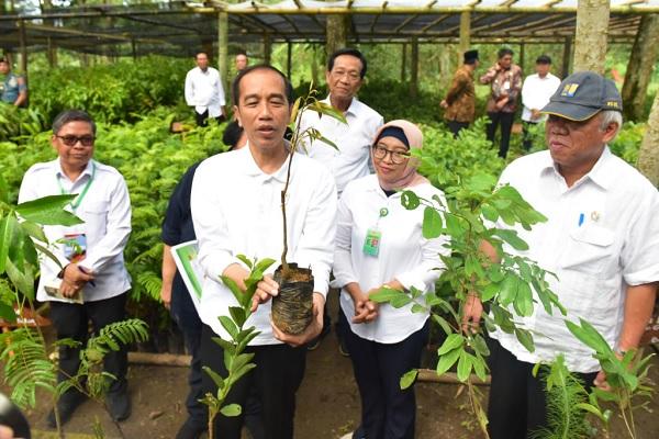 Jokowi: Ada Fungsi Penghijauan & Ekonomi di TN Gunung Merapi