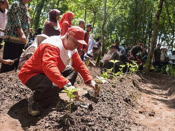 Biar 'Nendang', Jokowi Minta Penanaman Kembali Jutaan Pohon