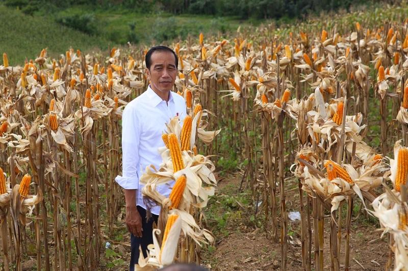 Sektor Pertanian Kontribusi Besar Pembangunan Ekonomi