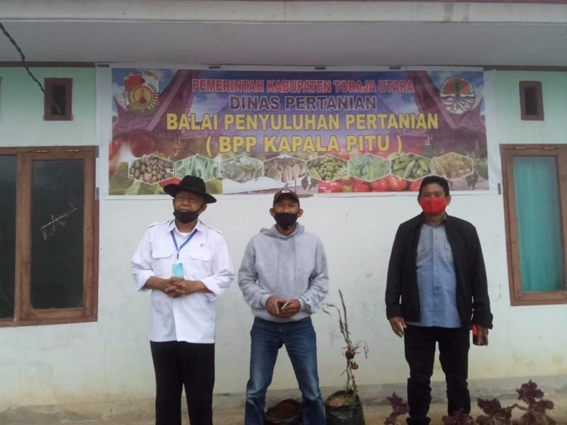 Bupati Kalatiku & Samuel Lande Panen Cabai di BPP Kapalapitu