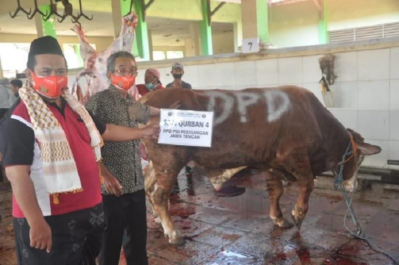 Gotong Royong Idul Adha, Banteng Jateng Kurban 12 Ekor Sapi