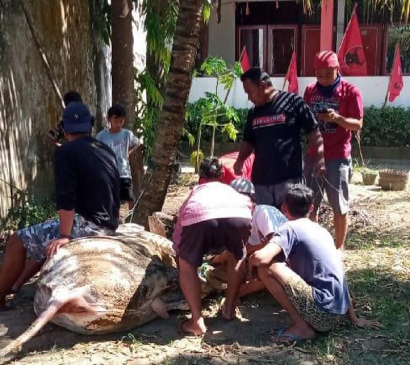 PDI Perjuangan Kurban Sapi Petani Milenial Pakis Magelang