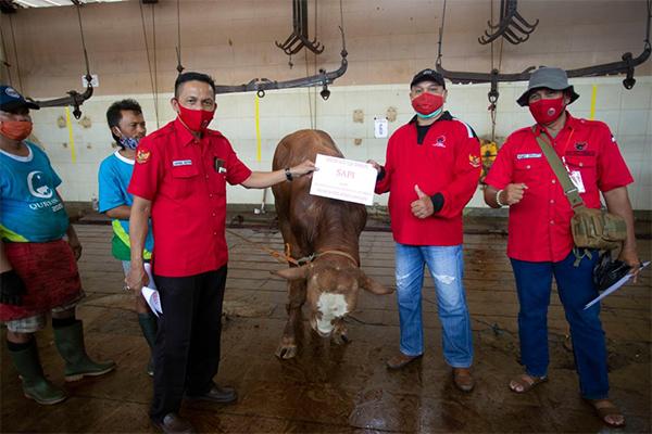 Banteng Surabaya Bagikan Daging Kurban dari Rumah ke Rumah