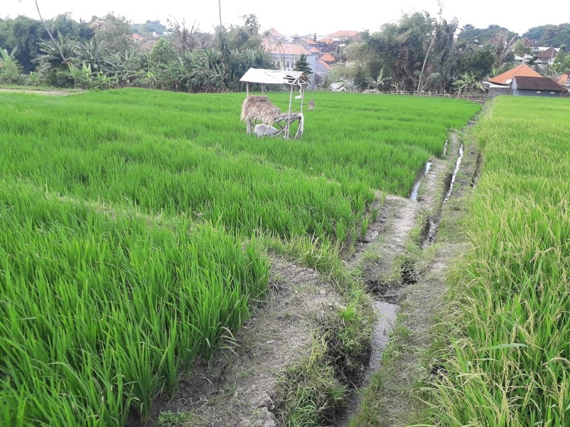 Effendi: Solusi Hadapi Resesi, Optimalkan Sektor Pertanian