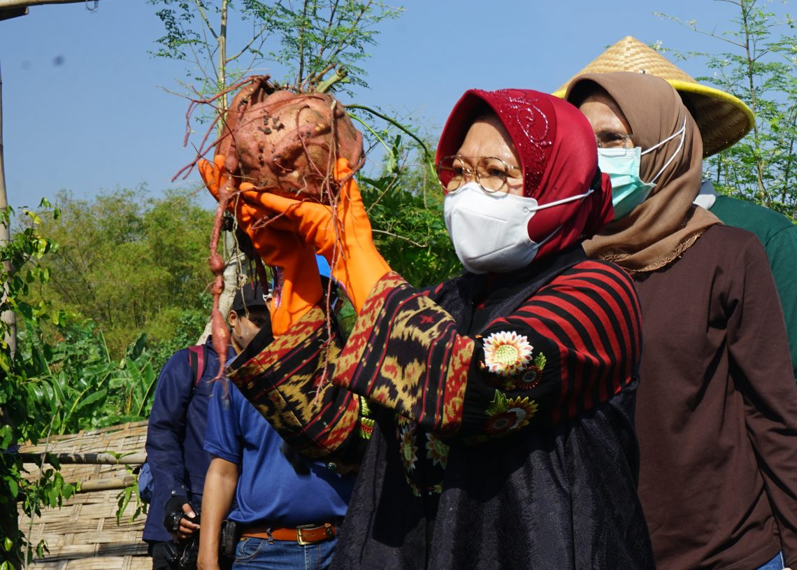 Risma Siapkan Lahan BTKD Jadi Pusat Agrowisata
