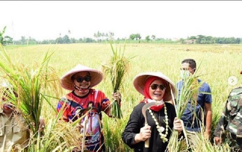 Hadiri Panen Raya, Nina Agustina Dukung Kedaulatan Pangan