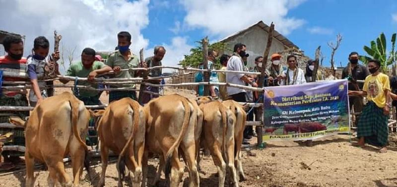 Ansy Sukses Perjuangkan Puluhan Kambing & Sapi Untuk NTT