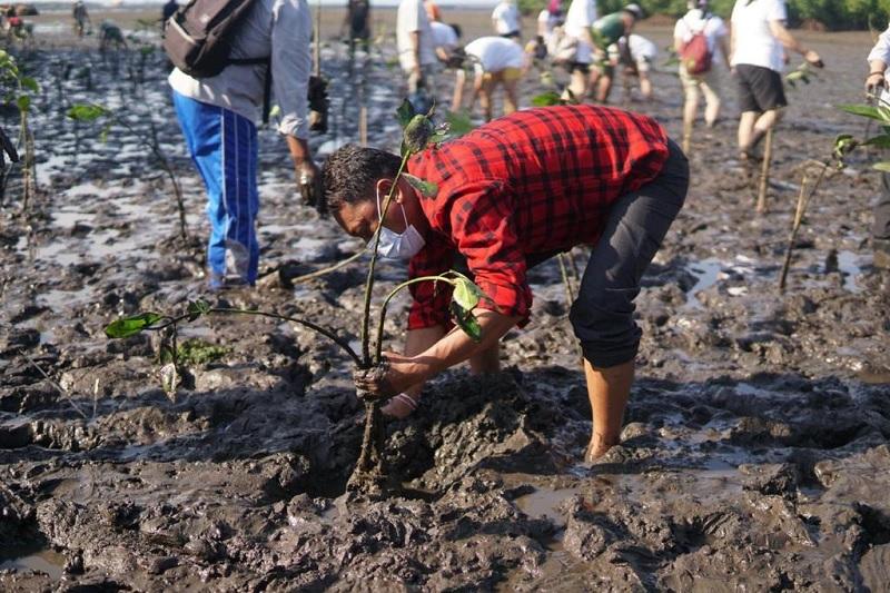 Kariyasa Turut Tanam Mangrove, Jaga Lestarinya Kedonganan