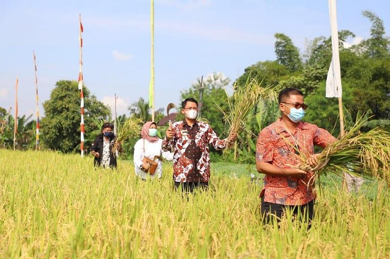 Danang Maharsa & Komunitas Tani Mandiri Panen Raya Organik