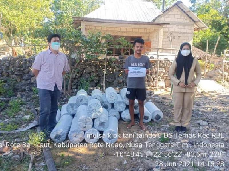 Sinergi Ansy-Kementan Bikin Petani Rote Kembangkan Cabai