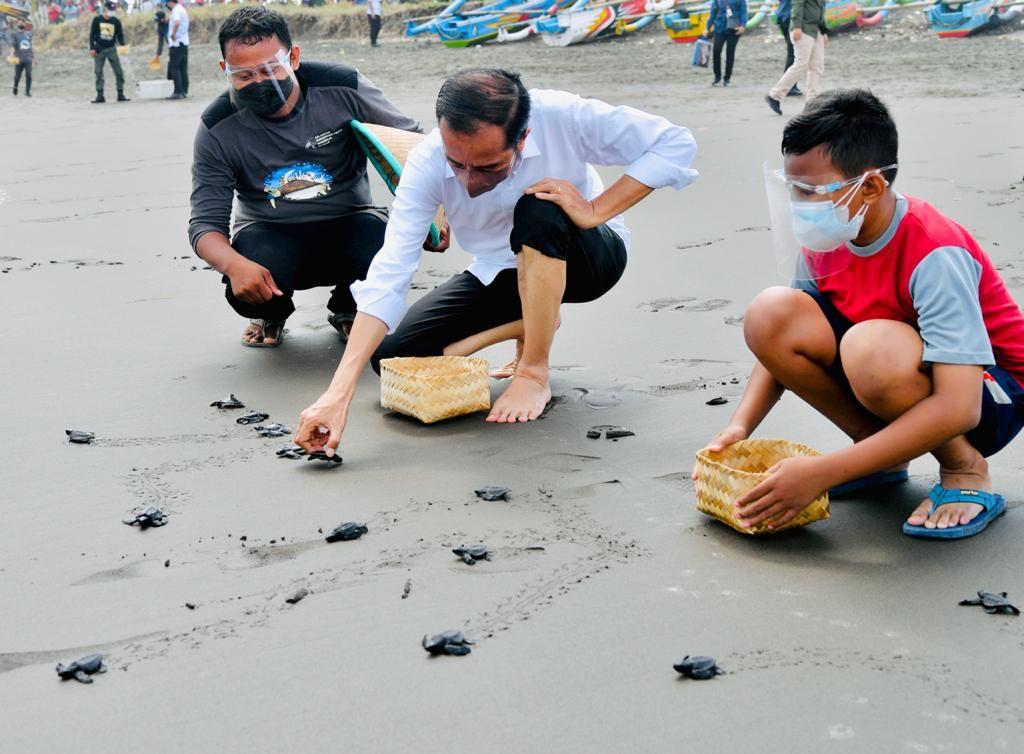 Presiden Jokowi Ajak Masyarakat Lestarikan Penyu