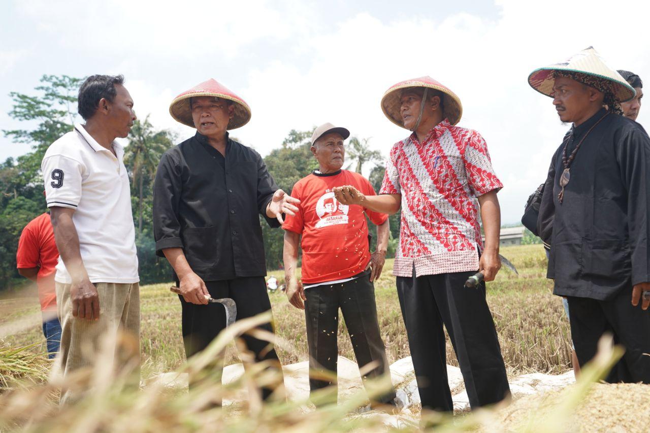 Kang Hasan blusukan ke petani